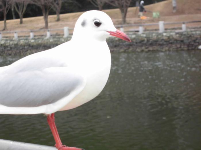 CIMG4640.JPG