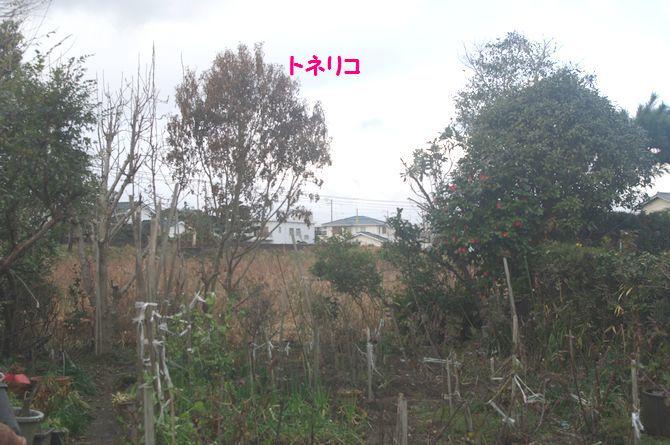 IMGP1457.JPG