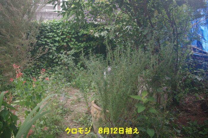 IMGP3811.JPG