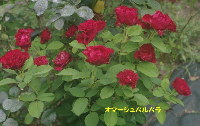 IMGP6321.JPG