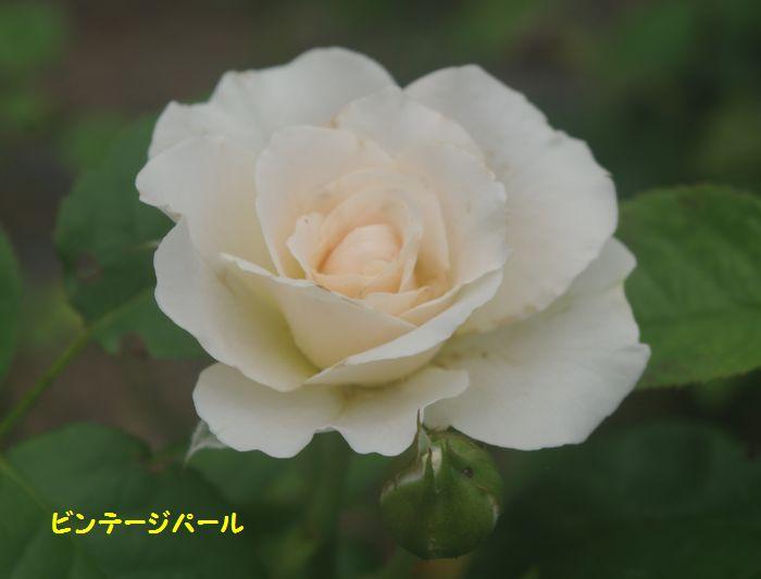 IMGP6323.JPG
