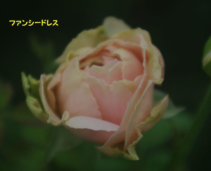 IMGP6403.JPG