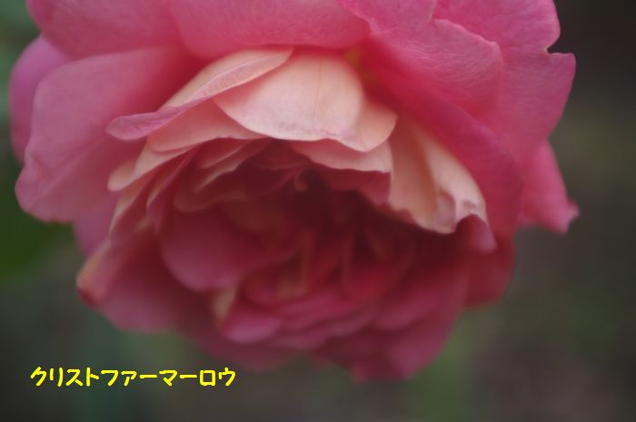 IMGP7563.JPG
