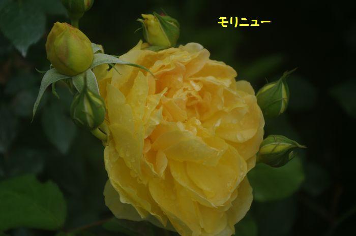 IMGP9012.JPG